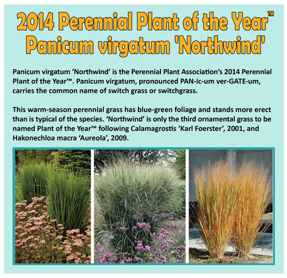 Perennial-Plant-of-the-Year