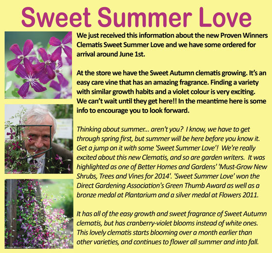 Sweet-Summer-Love